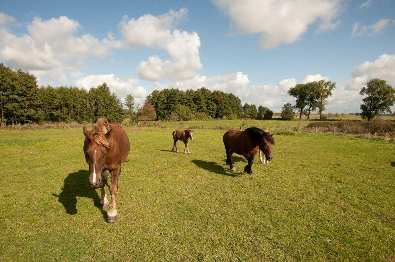 Konie naszą pasją